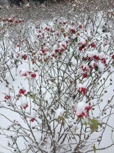 nevicata 15dicembre2012 022